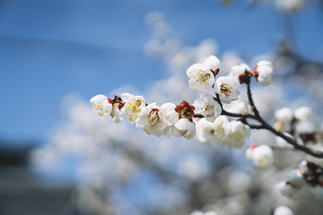 OSAKA KYOTO - DERRY AINSWORTH-2-12.jpg