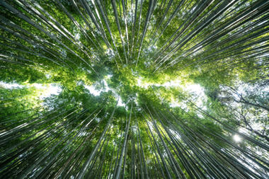 OSAKA KYOTO - DERRY AINSWORTH-2-13.JPG
