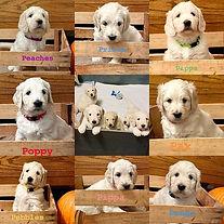 We're 5 weeks old!! 5 reserved, 3 spots