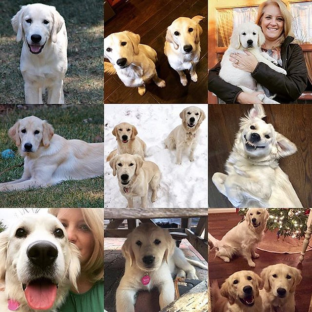 We've had a great year growing our dog f