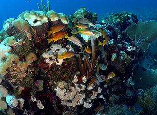 reef life 2.jpeg