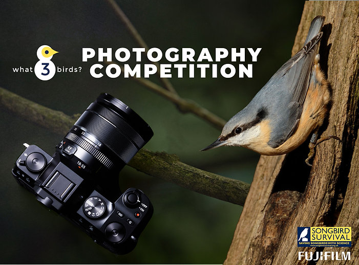 what3birds photography comp graphic 2.jp