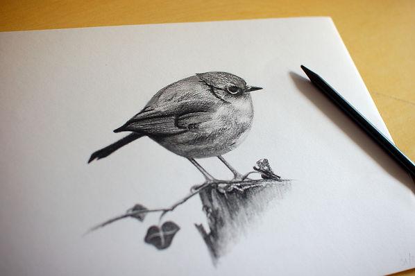 Robn pencil drawing