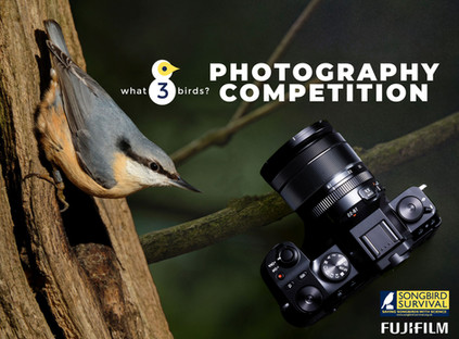 21/06/21 - SBS what3birds? Photography Competition opens