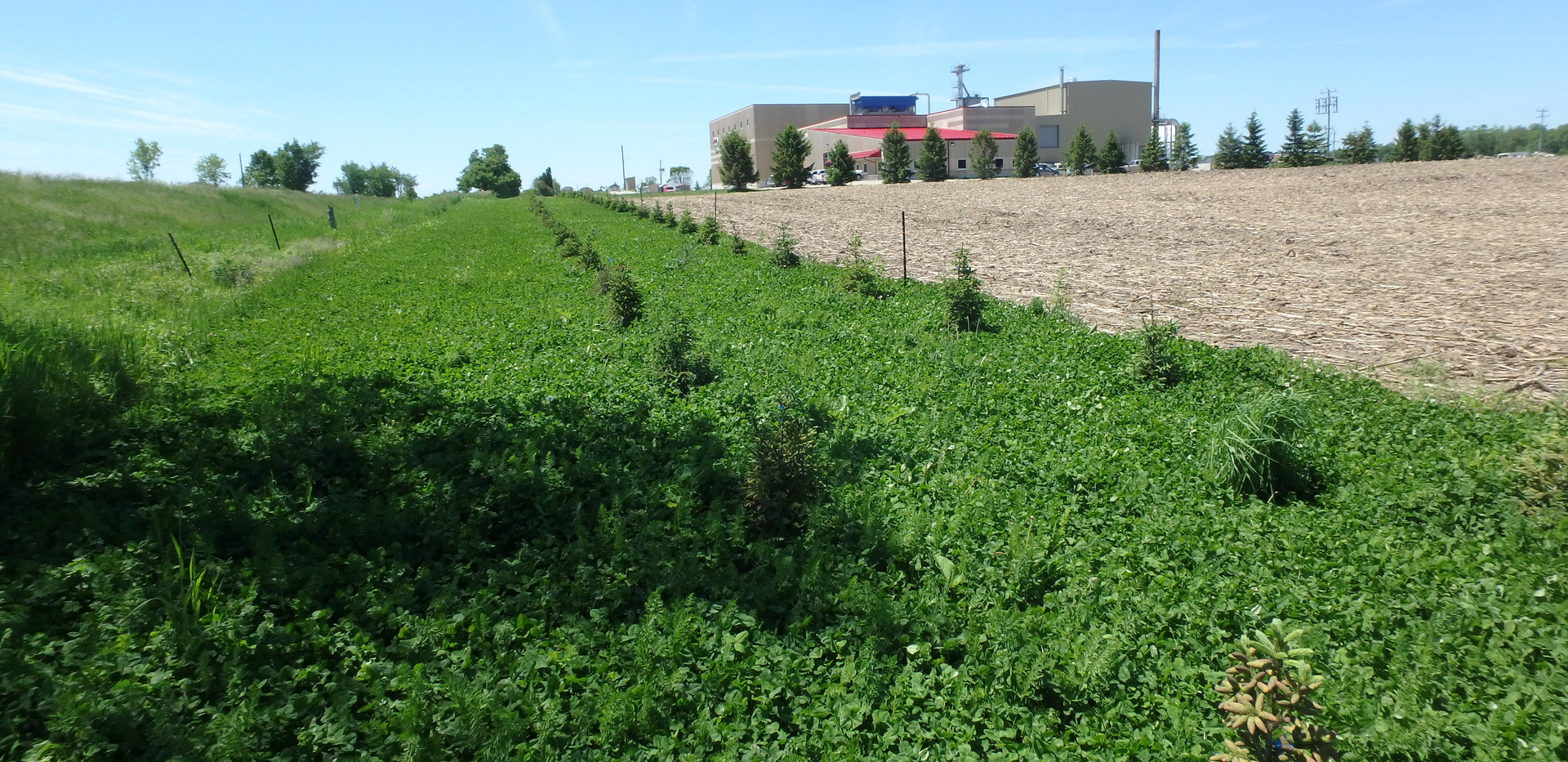 Summer 2017 Snow Fence + Clover Cover