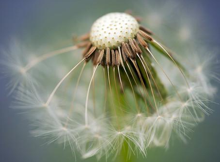 5 Natural Antihistamines to Combat Allergies