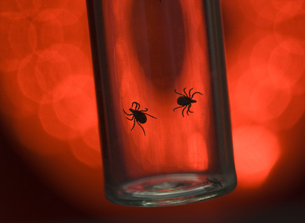 Why Bartonella is the New Lyme Disease