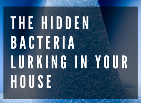The Hidden Bacteria Lurking in Your House
