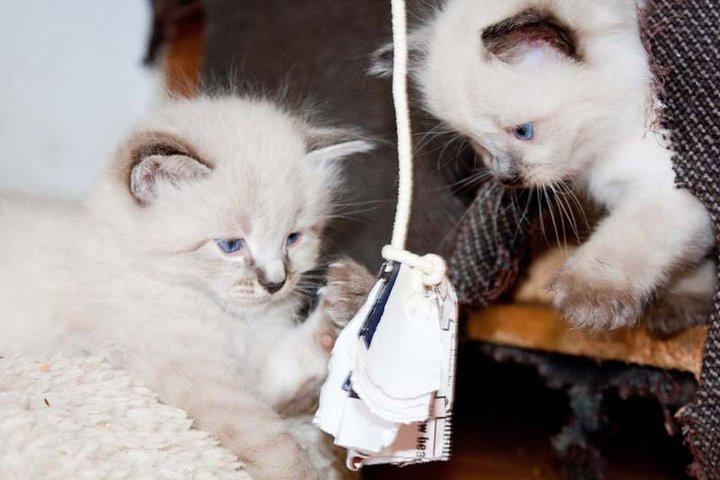 cats-kl