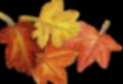 hojas.jpg.png