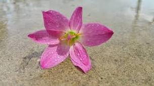 images fleur.jpg