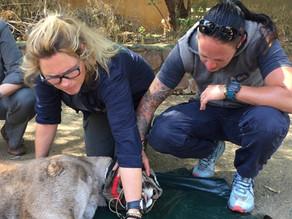 Environ supports big cat sanctuary