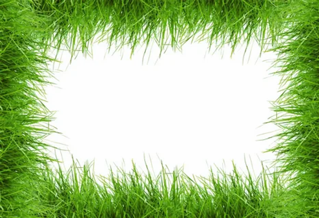 рамка трава.webp