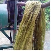 long fiber.PNG