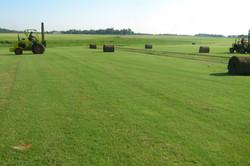 Turf Farm & Mega Rolls
