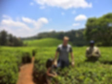 Visiting a tea plantation in Kenya