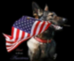 Mutt22 Service Dog for Vets
