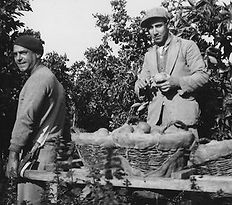 רחמים 22 מקווה ישראל 1936 ק.jpg