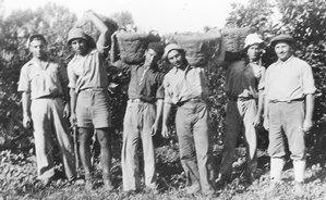 Mikve Israel 1934 רחמים שבירו גלבוע