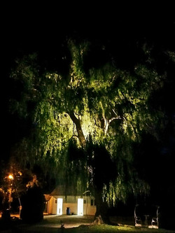 L'arbre en lumière