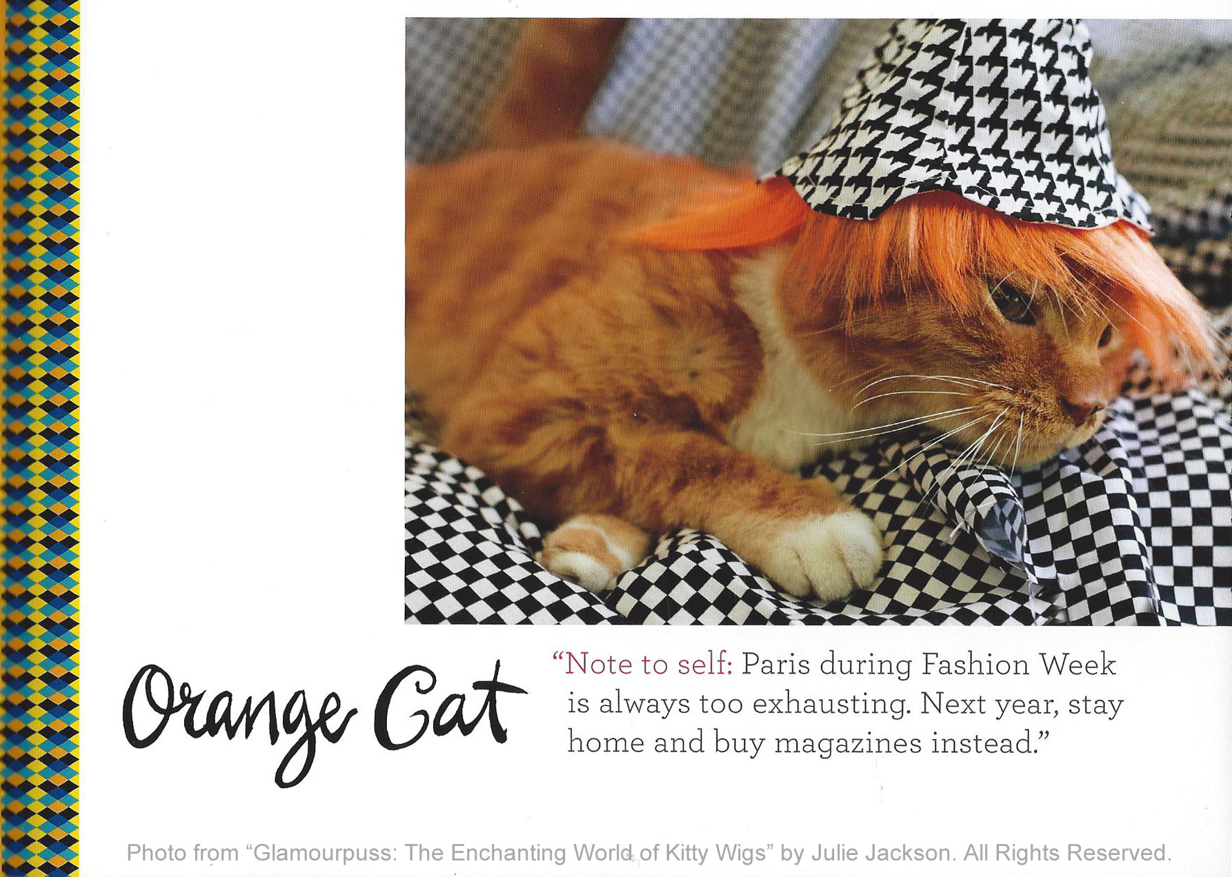 From The Book: Orange Cat