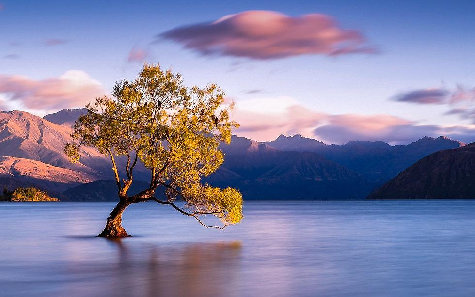 206-2066357_lake-wanaka-new-zealand-wanaka-tree-nz.jpg