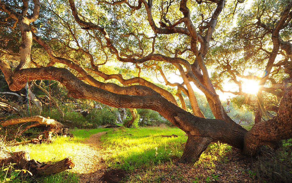 Big-trees-grass-morning-bushes-sunrise_2