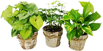 planters spring cropped ppsd.png