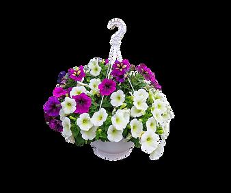 hanging basket petunias.png
