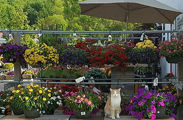 CAT IN FRONT OF HANGING POTS.png