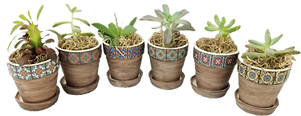 planters southwestern cropped ppsd.png