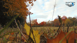 AutumnPic1.jpg