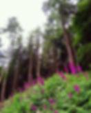 Cardinham Woods March 2018.jpg