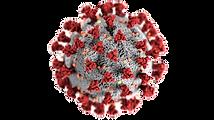 coronavirus_edited.png