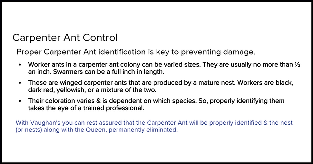 Carpenter Ant Control Vaughans Pest.png