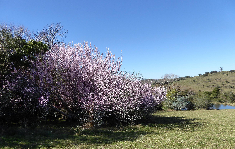 primavera en Onkaiujmar