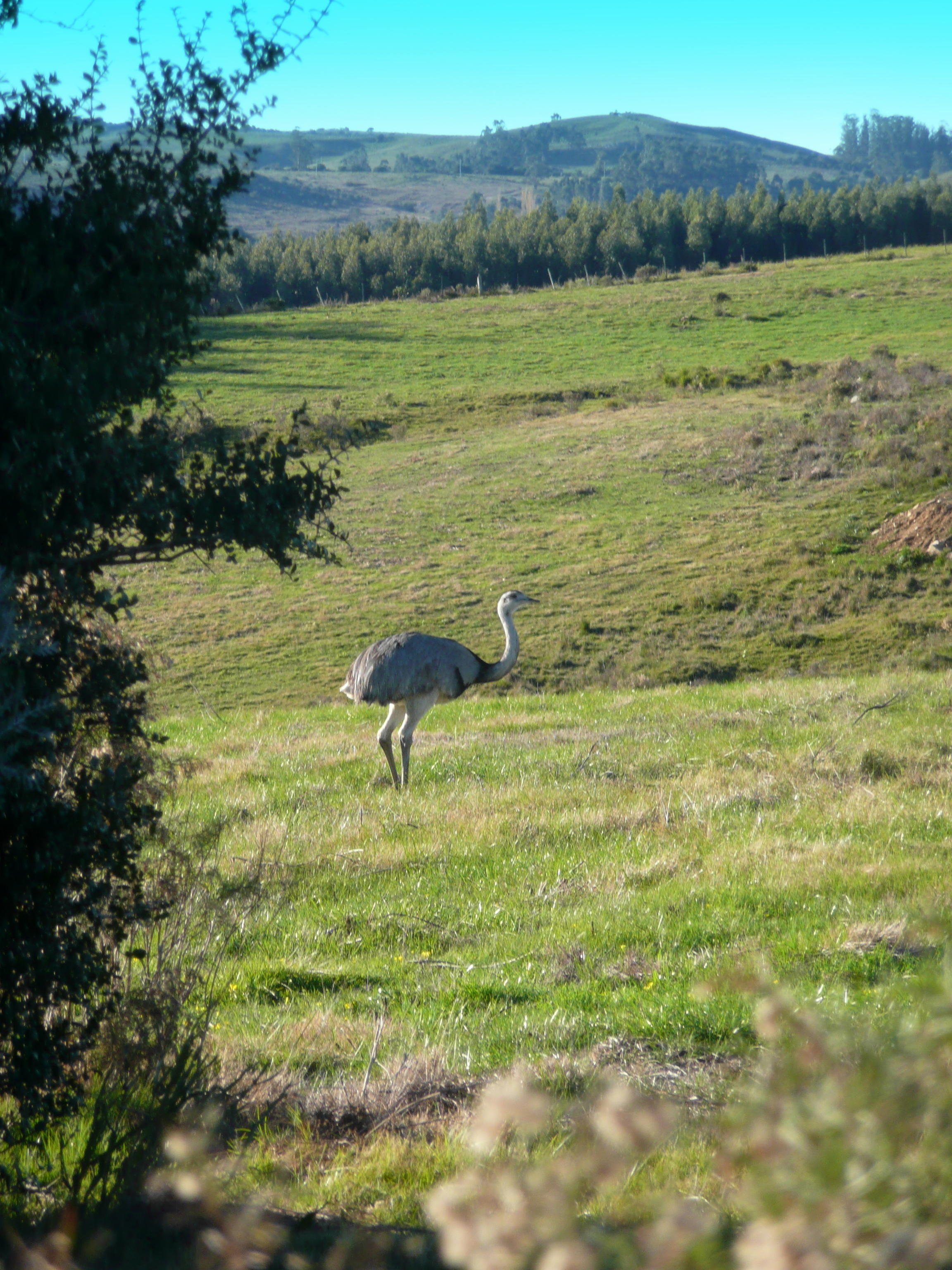 Fauna cerca de Pueblo Eden