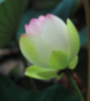 Akhanda yoga, yoga, teen yoga, pilates, reflexology, aromatherapy, relaxation, wellbeing, calm