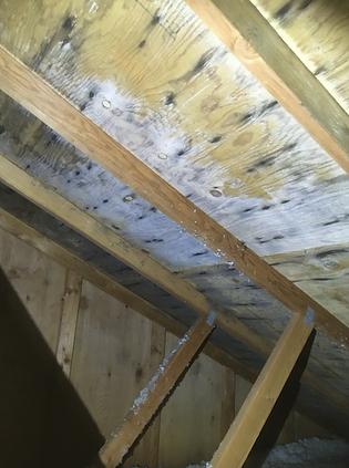 Mold growth attic portland.png