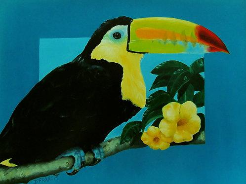Toucan II ~ PRINT