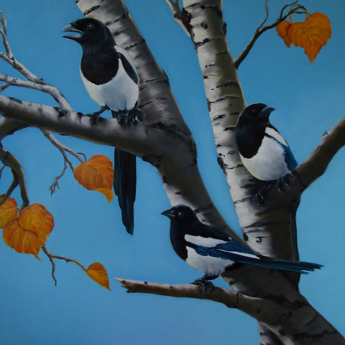 """""""Chattering Magpie"""""""