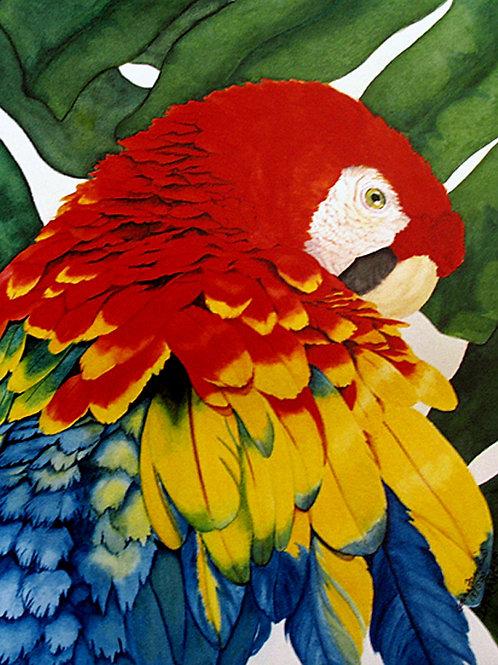 Macaw! ~ PRINT