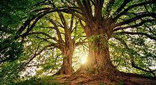 arbre_conf_Lefebvre.jpg