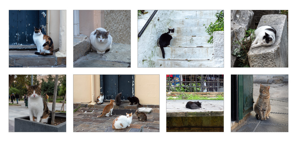 Street Cats of Athens2.jpg