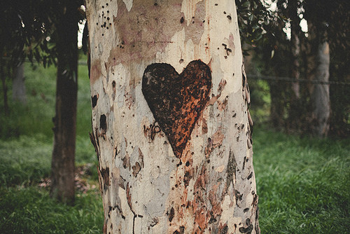 Carved Tree Heart | Flickr - Photo Sharing!