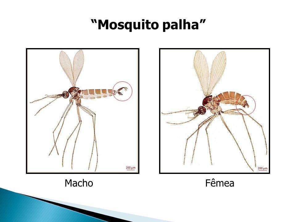 Mosquito Palha - Imagem retirada da internet