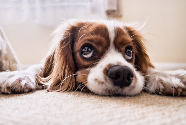 We at deep steam take pride to provide the safest carpet cleaning for your pets.  We use a 2 step method which we rinse your carpet from and soap residue left behind.  Your carpet comes out fresh and soft because there is no sticky mess left behind.  It will in turn attract less soil too.
