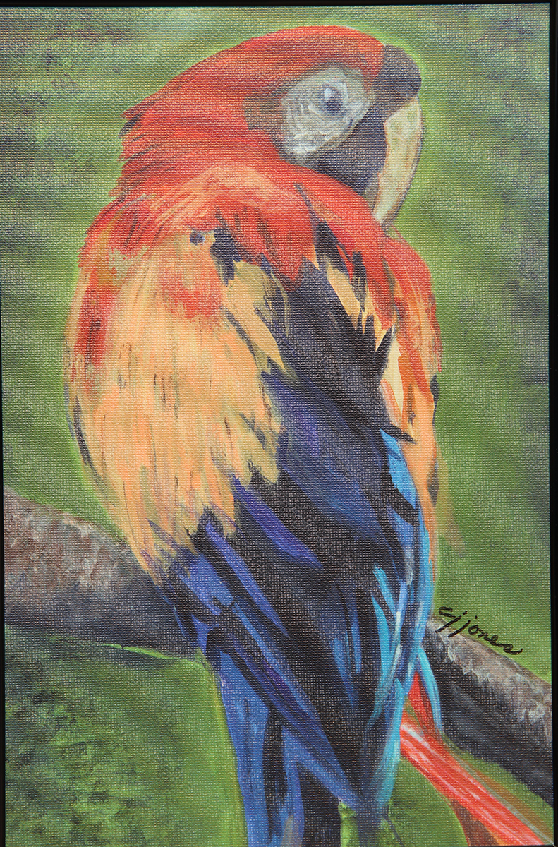 Parrot His Majestygiclee on canvas8x11-12 framed