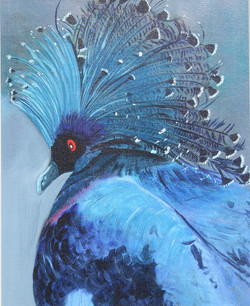 Blue bird Victoria Crowned Pigeongiclee on canvas13-12x21-12 framed