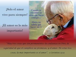 ¡Solo el amor vive para siempre! ¡El amor es lo más importante!